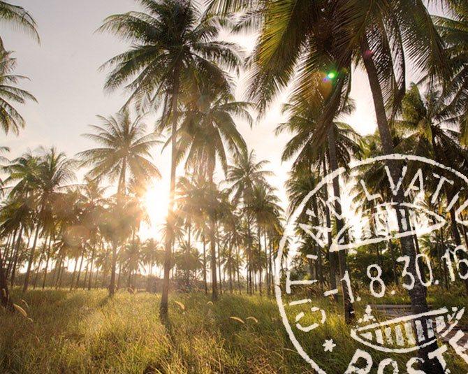 cocobella coconut water plantation