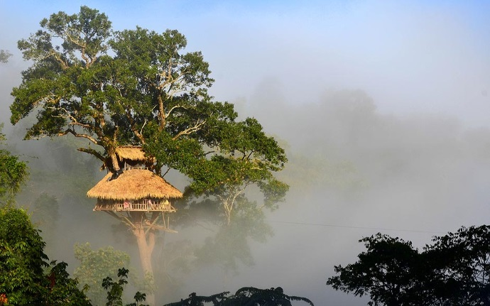 treehouse_6